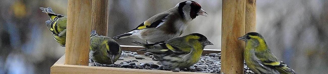 Vogelfutterhaus, Vogelhaus kaufen, Futterhaus für Vögel, Vogelfutterhaus kaufen, Vogelfutterhaus mit Ständer, Nistkasten kaufen, Vogelhäuschen kaufen, Vogelhäuser kaufen, Nistkasten für Meisen,