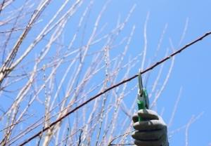 Gartengehölze vor dem Winter schneiden