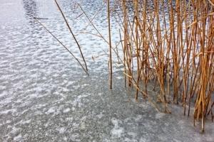 Den Teich winterfest machen